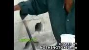 Ако Не Сте Гнусливи, Гледайте Го!бездомник Яде Живи мишки