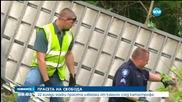 22 000 прасета избягаха от камион след катастрофа
