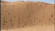 Пикап срещу голяма пустинна дюна