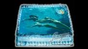 H2o Торти