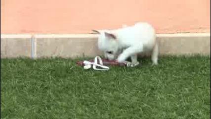 Малко игриво кученце:)