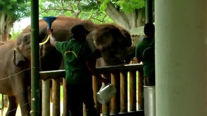 """Спасяване на слончета сираци (""""Без багаж"""")"""