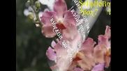 Като Орхидея - Зорница Петровска