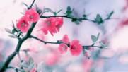 5 места, където е вечна пролет