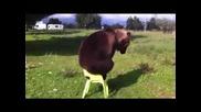Типично руска мечка с водка и балалайка