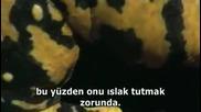 Canavarlarla Yurumek 2. Bolum Izle 2011 Hq