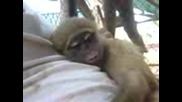 luda Maimuna