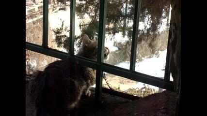 котката говори със свраките