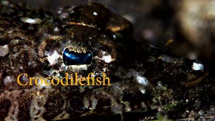 Две невероятни същества - крокодилска риба и скарида Full Hd