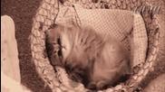 meow... :3