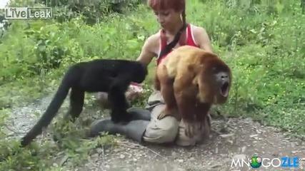 Маймуна издава странни звуци