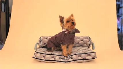 Juicy Couture кученце