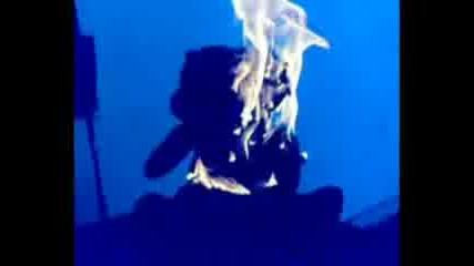 Екзекуцията - Предателя На гумените Мечета