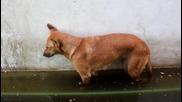 Куче заспива право и пада във вода !!!