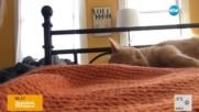 Как да събудим котето?