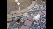 Пилета Полицаи Разтървават Биещи се Зайчета