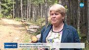 Жителите на Сопот - притеснени заради сеч в гората
