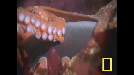 Изумително - Октопод Срещу Акула