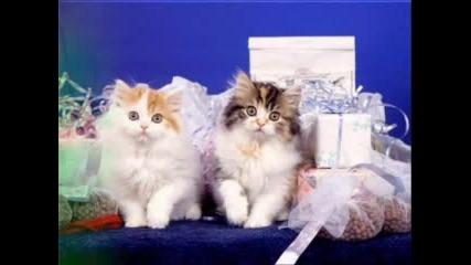 Сладки Котенца 3