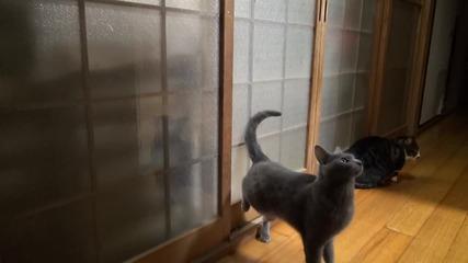 Котка почуква на вратата за да и отворят