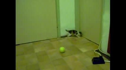 Едно Котенце