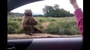 Най любезната мечка на света!