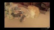 Най - шантавите котки - Смях!