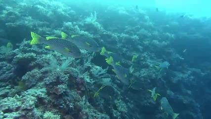 Морски Свят