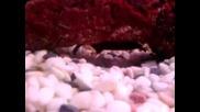Нашите рибки