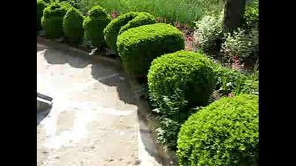 Борово - Образцова градина 2