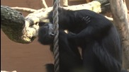 Motherly love for baby francois langur