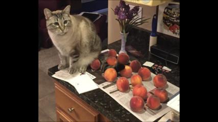 Истинска любов: Котка заобича ПРАСКОВИ по необикновен начин