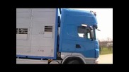 New Scania bovi trans porcs