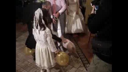 Прасенце На Сватба