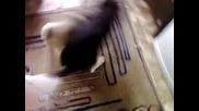 Видео - 0009.mp4