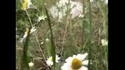 Малин Демозетски-песен за Мануш войвода