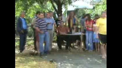 Левуново 2008 - Борби