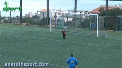 Упорита коза прекъсна мач в Гърция