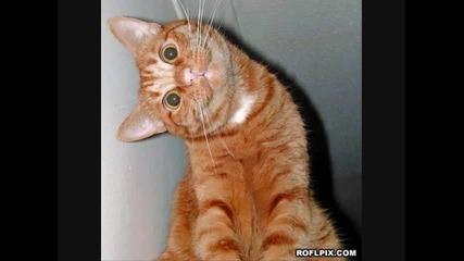 Смешни снимки от roflpix.com