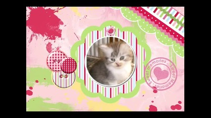 Sweet Kittens ^^