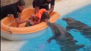Страхотно шоу с делфини