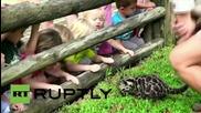 Маугли - Димен леопард на 6 седмици