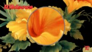 ... Hibiscus flowers! ...