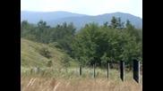 Депутатите приеха промените в Закона за горите