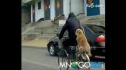 Куче се вози на колело!смях
