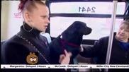 Куче се вози само в автобус, за да отиде до парка