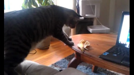 Коте се плаши от банан