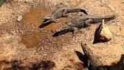 """Резерват за крокодили в Куба (""""Без багаж"""" еп.67)"""