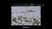 Убийствена Гръцка Балада [превод] Добър вечер / Antonis & Giannis Vardis - Kalo vradu