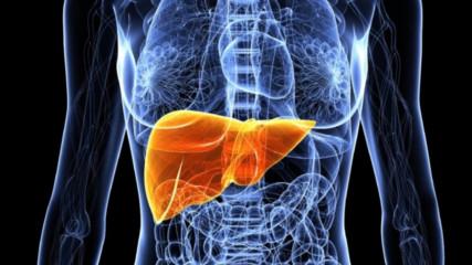 Откриха нов орган в човешкото тяло